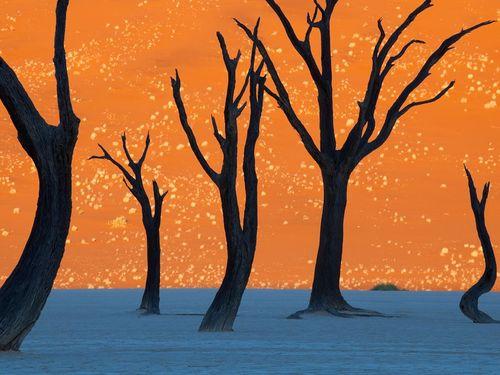 Camel-thorn-trees-namibia_35259_990x742